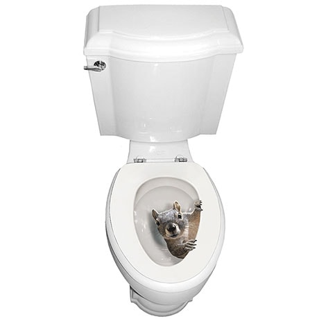Squirrel Toilet Seat Decal Sticker