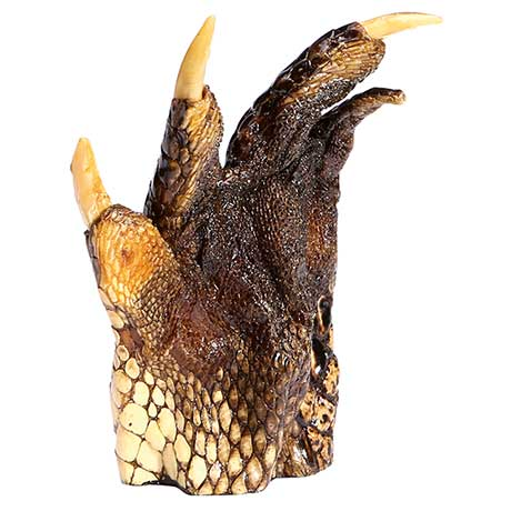 Real Alligator Foot