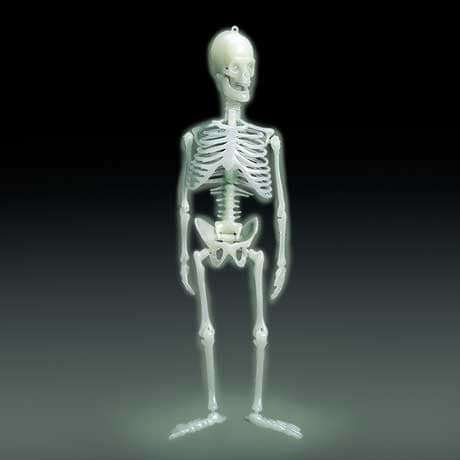 Glow-In-The-Dark Human Skeleton