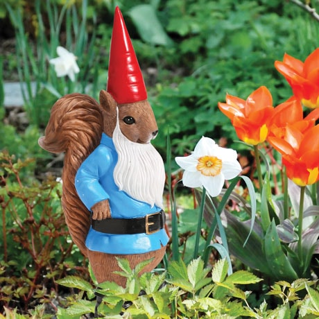 Finkledus The Squirrel Gnome