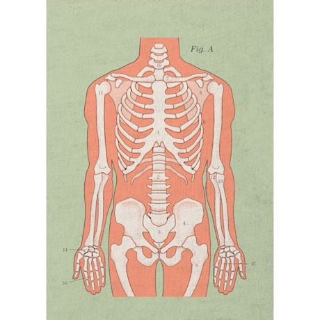 Anatomical Kitchenware Collection - Towels