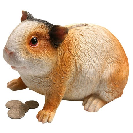 Guinea Piggy Bank in Life Size Resin
