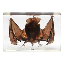 Bat Specimen Paperweight