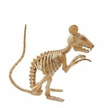 Animated Rat Skeleton
