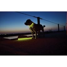 Light-Up Dog Collar And Leash Set