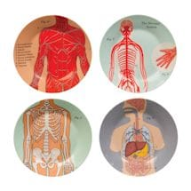 Anatomical Kitchenware Collection - Plates